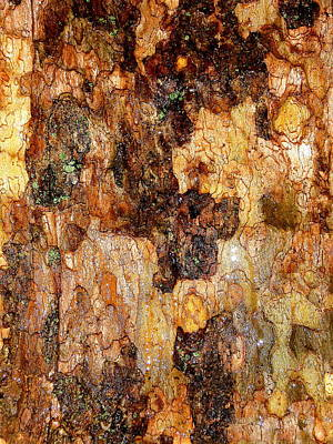 Wet Tree Bark 1 Print by Beth Akerman