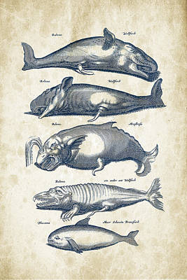 Dolphin Digital Art - Whale Historiae Naturalis 08 - 1657 - 41 by Aged Pixel