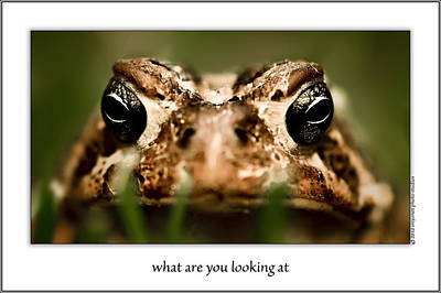 What Are You Looking At Print by  Onyonet  Photo Studios