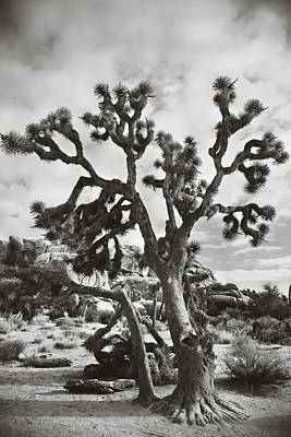 Joshua Tree Photograph - What I Wouldn't Give Bw by Laurie Search