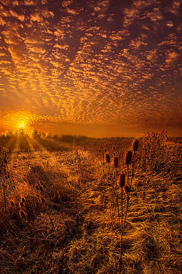 Thistles Photograph - What Will Be Will Be by Phil Koch