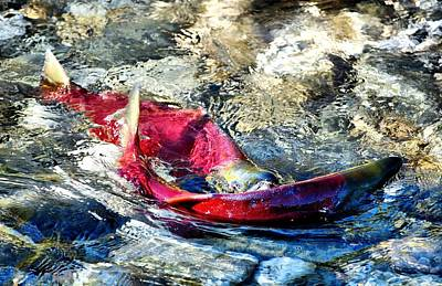 West Fork Digital Art - Whats For Lunch by Don Mann
