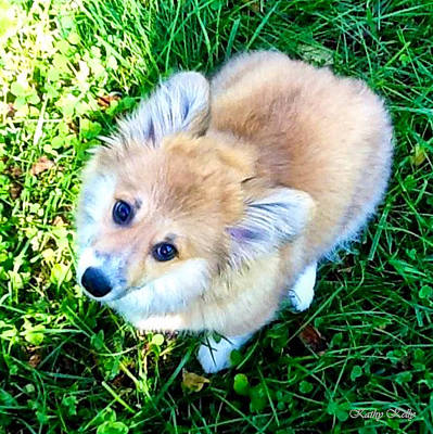 Corgi Photograph - What's Up? by Kathy Kelly