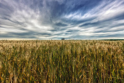 Wheat Field Print by Stelio Photography