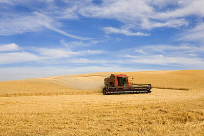 Farm Photograph - Wheat Harvest by Mike  Dawson