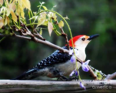 Woodpecker Digital Art - When  by Anita Faye