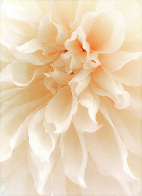 Delicately Photograph - When Nature Becomes Divine by Karen Wiles