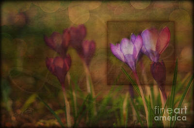When The Light Paints The Flowers Print by Joy Gerow