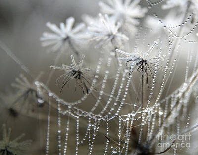 Spiderweb Photograph - Where Jack Frost Sleeps by Jan Piller