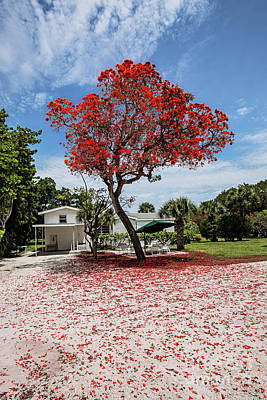 Photograph - Where The Red Tree Grows by Scott Pellegrin