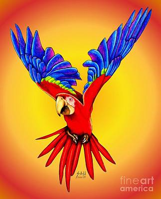 Macaw Drawing - Where Was I Suppose To Land by Sheryl Unwin