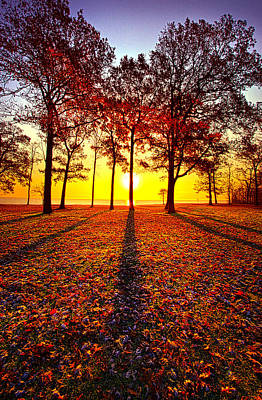 Environment Photograph - Where You Have Been Is Part Of Your Story by Phil Koch