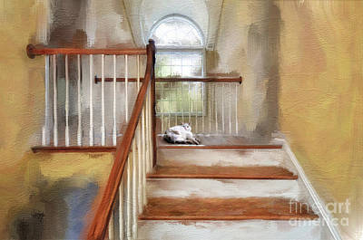 Kitty Digital Art - Where's Kitty by Lois Bryan