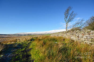 Whernside Tree Print by Stephen Smith