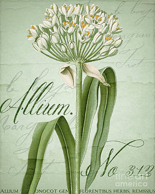 White Allium II Original by Mindy Sommers