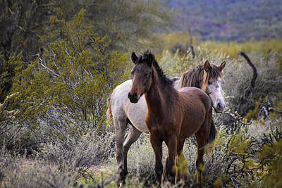 Desert Photograph - White And Brown Wild Salt River Horses by Dave Dilli
