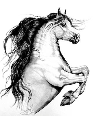 White Andalusian With Black Points Print by Cheryl Poland
