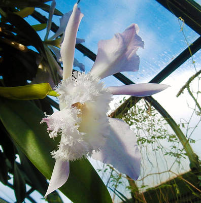 Photograph - White Angel Orchid by J R Baldini M Photog Cr