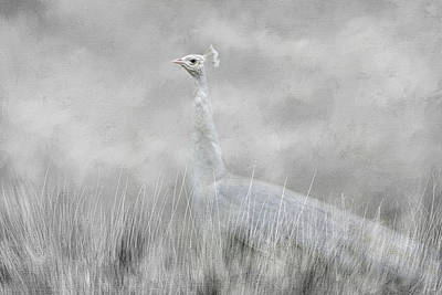 Peacock Photograph - White Beauty In The Field by Jai Johnson