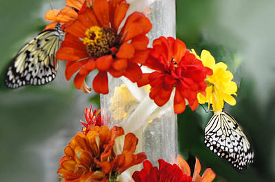 Paper Kite Butterflies Print by Art Spectrum