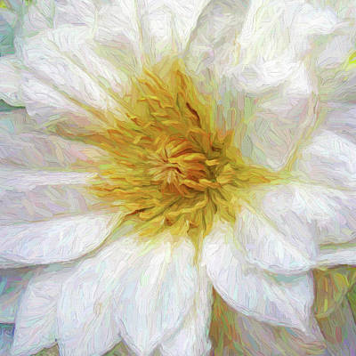 Plant Photograph - White Clematis by Marcia Colelli