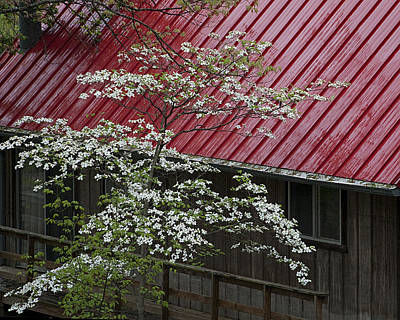 Dogwood Lake Photograph - White Dogwood In The Rain by Mitch Spence