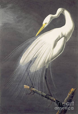 American Eagle Painting - White Egret, by Celestial Images