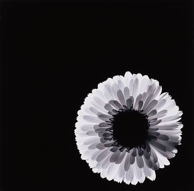 Flowers Flowers And Flowers Photograph - White Flower by Graeme Harris