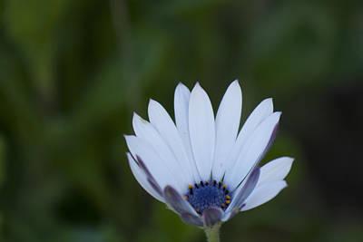 White Flower Print by M Valeriano