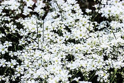 Digital Art - White Garden Flowers by Toppart Sweden