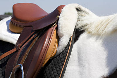 Horses Photograph - White Horse And Saddle by Marilyn Hunt