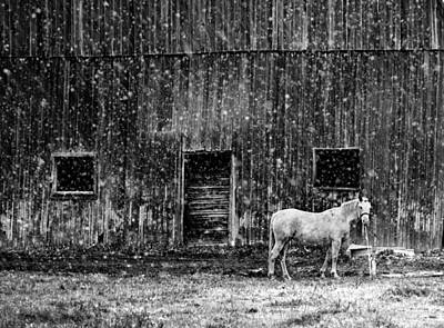 Snowstorm Photograph - White Horse In A Snowstorm In Bw by Maggie Terlecki