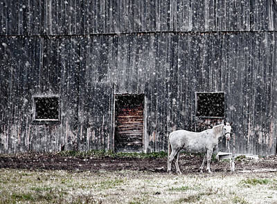 Snowstorm Photograph - White Horse In A Snowstorm  by Maggie Terlecki