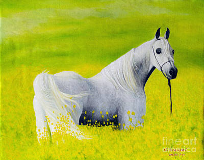Painting - White Horse by Fine art Photographs
