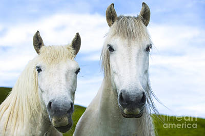 Islay Photograph - White Horses by Diane Diederich