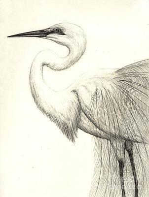 Ibis Drawing - White Ibis by Aurora Jenson
