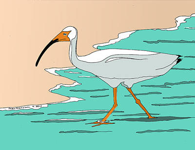 Ibis Drawing - White Ibis by Joan Mansson