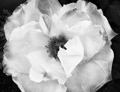 White Print by JoAnn Lense