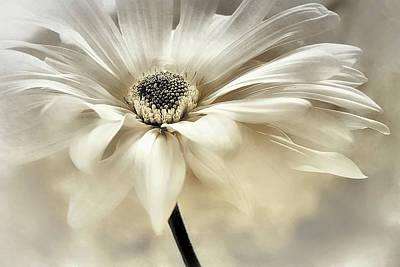 Photograph - White Lights by Darlene Kwiatkowski