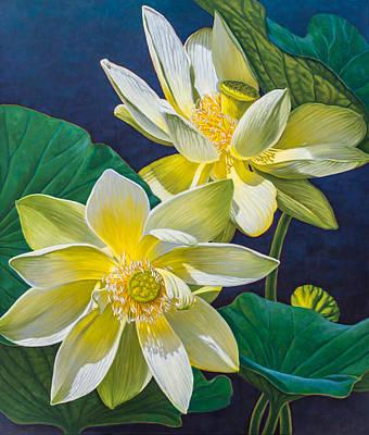 White Lotuses 1 Print by Fiona Craig