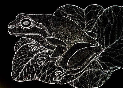 Amphibians Drawing - White On Black Frog by Nick Gustafson