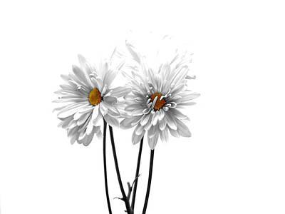 White Daisy Photograph - White On White by Regina Arnold