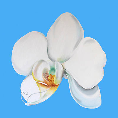 White Orchid Print by Elizabeth Lock