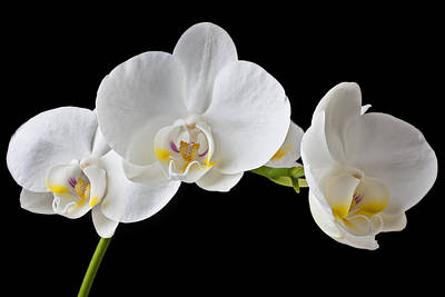Pretty Orchid Photograph - White Orchid by Garry Gay
