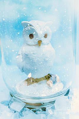 Cute Bird Photograph - White Owl In Snow Globe by Jorgo Photography - Wall Art Gallery