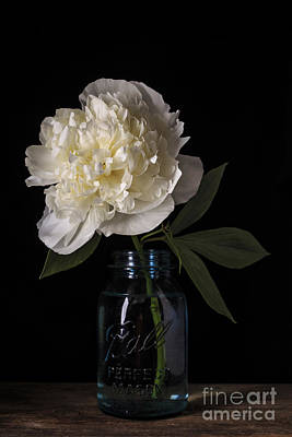 White Peony Flower Print by Edward Fielding