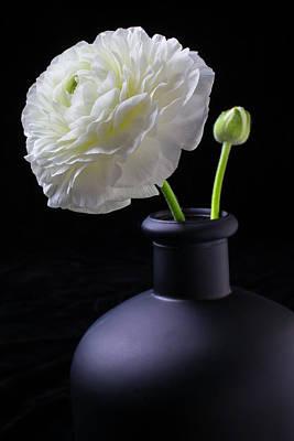 White Ranunculus In Black Vase Print by Garry Gay
