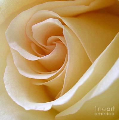Addie Hocynec Art Photograph - White Rosebud by Addie Hocynec