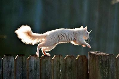White Squirrel  Print by Randall Branham