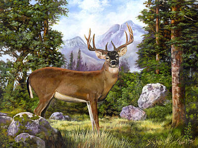 White Tailed Deer Print by Robert May